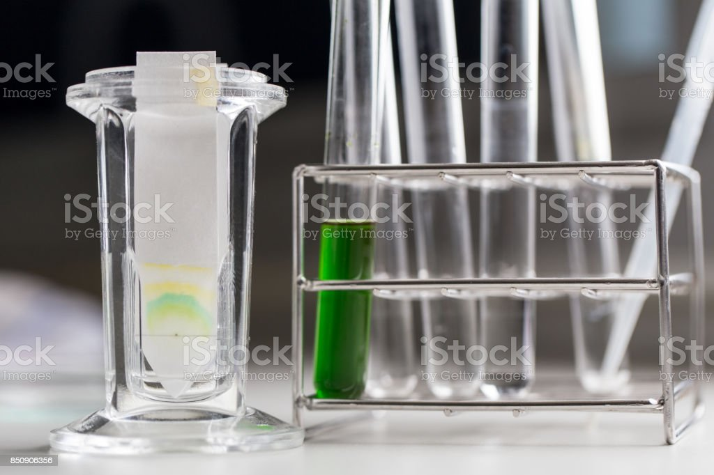 Study of Chromatography is used to separate components of a plant. stock photo