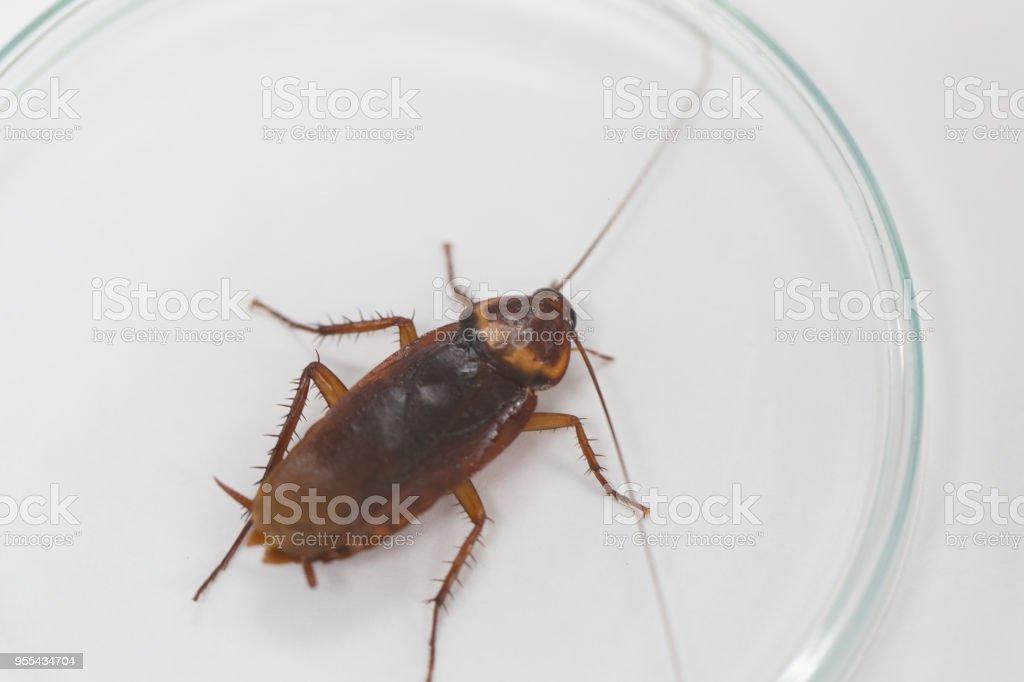 parásito gusano cucaracha