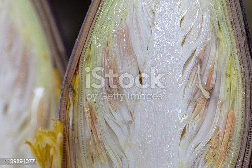 848267780istockphoto Study of flowering and fruit structures for education in laboratory. 1139891077
