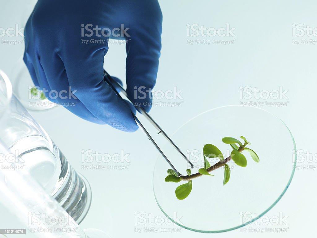 studying a plant in the lab royalty-free stock photo