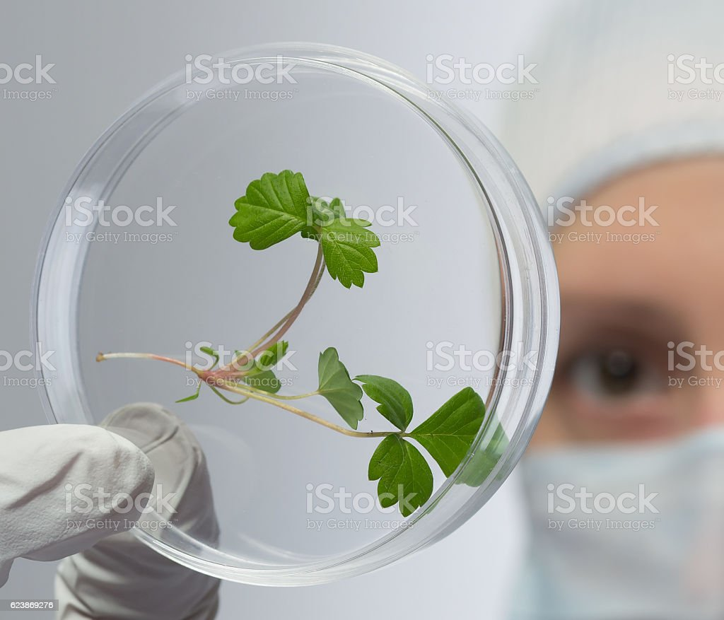 studying green sprout on the glass stock photo