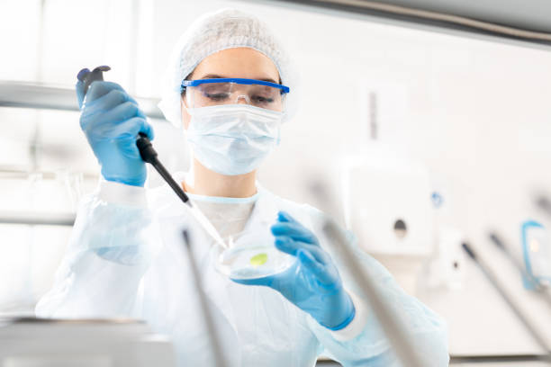 Studying microbiological sample Serious busy young female scientist in disposable cap and gloves using dropper while adding sample into petri dish, she studying microbiological sample medical research stock pictures, royalty-free photos & images