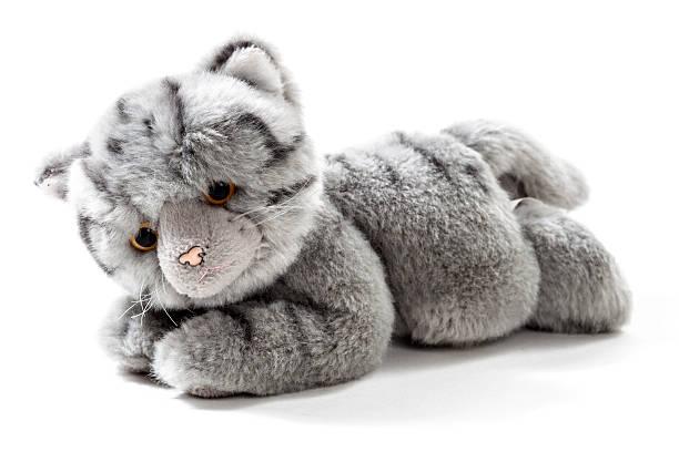 Stuffed animal cat picture id577311300?b=1&k=6&m=577311300&s=612x612&w=0&h=kwwlcbbmkhp gj xdsozvlmaa7frgi1dsvbcz3ks83i=