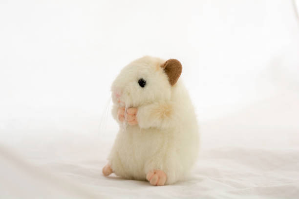 Stuffed animal rat toyisolated on white background picture id942192852?b=1&k=6&m=942192852&s=612x612&w=0&h= rxravuhayapqkc fkautliohg3thsfsu0ljbrlgkjo=