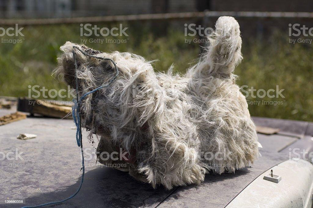 Stuffed dog stock photo
