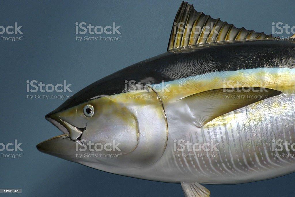 Stuffed fish royalty-free stock photo