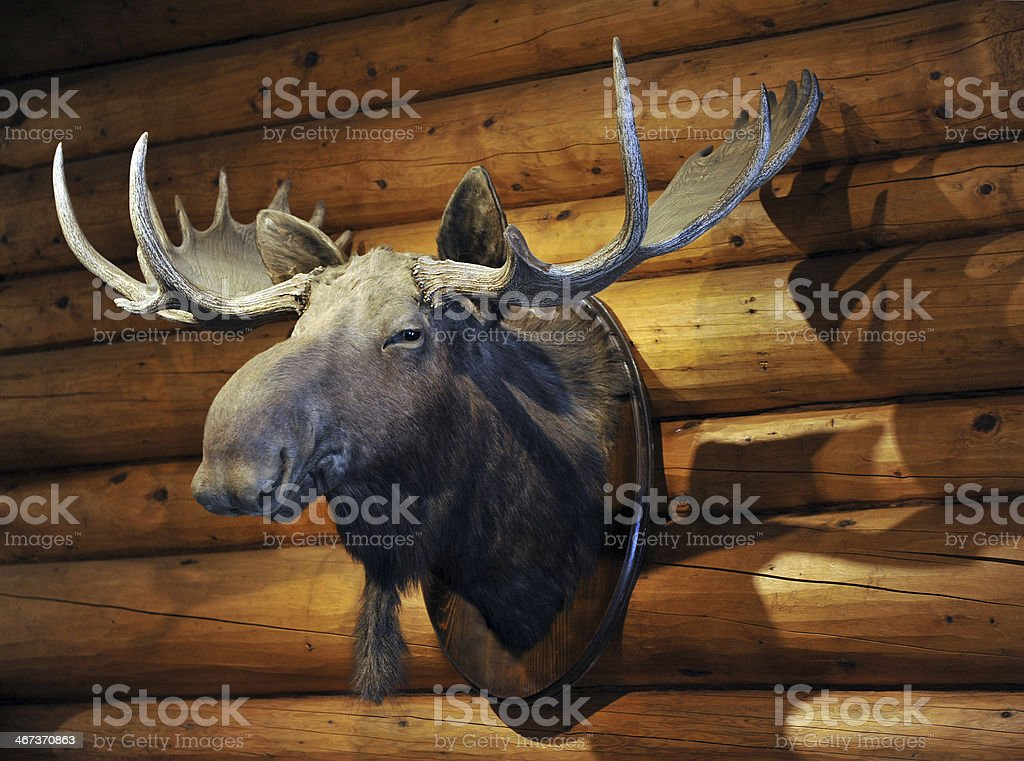Stuffed Moose stock photo