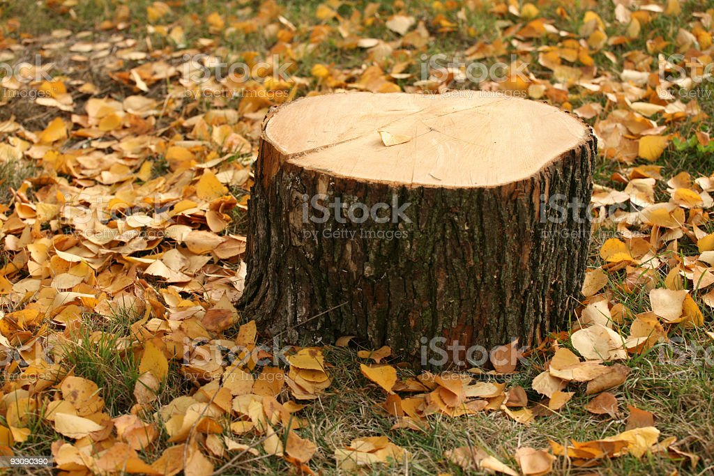 Stump and leaves on autumn royalty-free stock photo