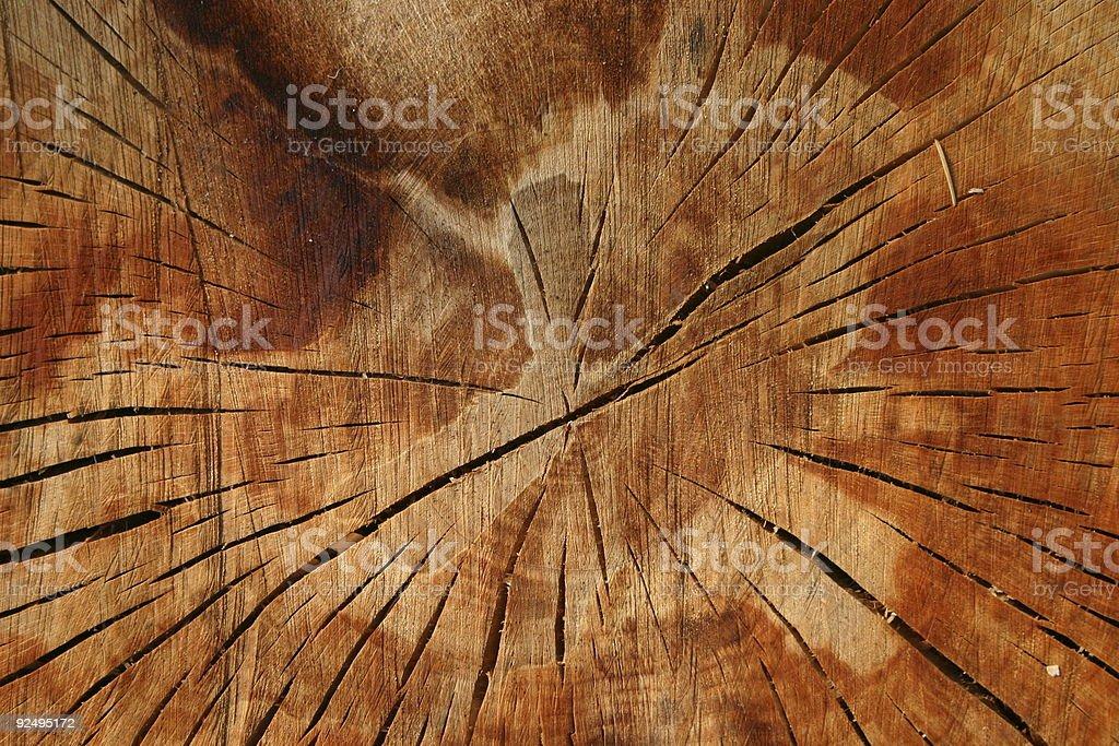 stump detail royalty-free stock photo
