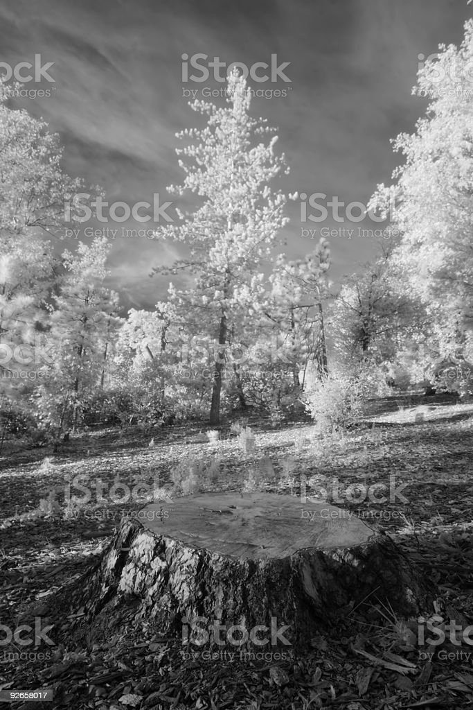 Stump Forest Landscape Infrared royalty-free stock photo