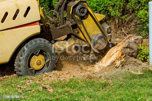 A stump is shredded with removal, grinding the stumps and roots into small chips
