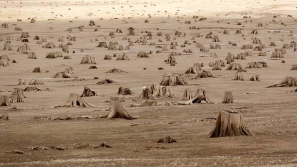 tierra de tocón - deforestacion fotografías e imágenes de stock