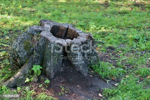 The stump of an old tree closeup on a forest glade