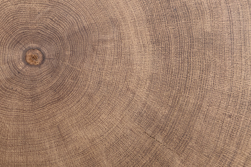 stump of oak tree felled - section of the trunk with annual rings.