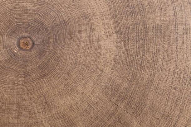 souche d'arbre abattu - section du tronc avec des cernes annuels. - bague photos et images de collection