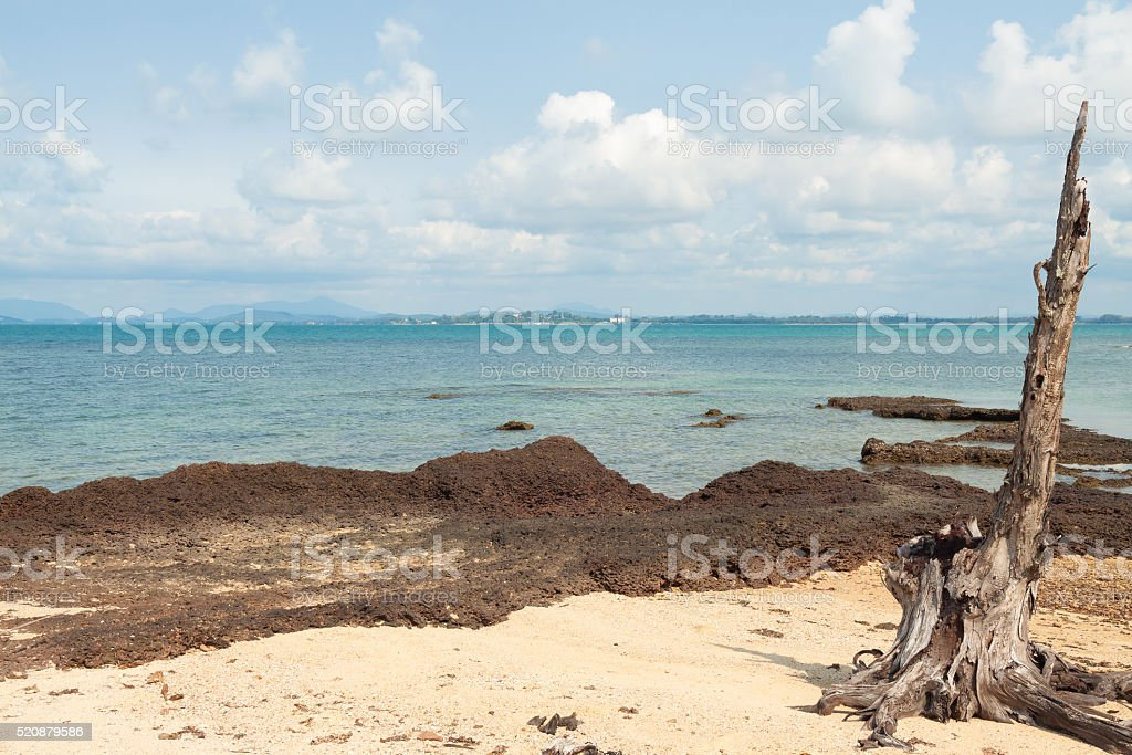 Stump on beach of island in thailand royalty-free stock photo