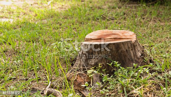 Stump on green grass in the garden. Old tree stump in the summer park.