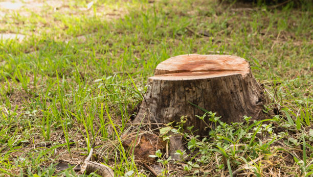 Stump on green grass in the garden. Old tree stump in the summer park. stock photo