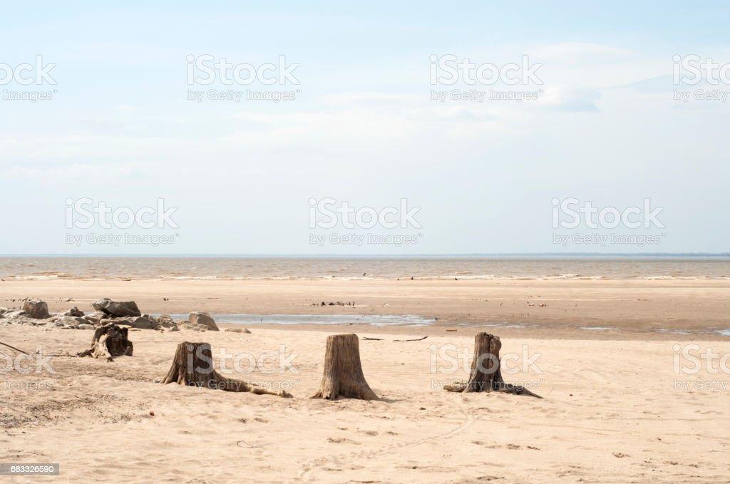 Stump sur la plage photo libre de droits