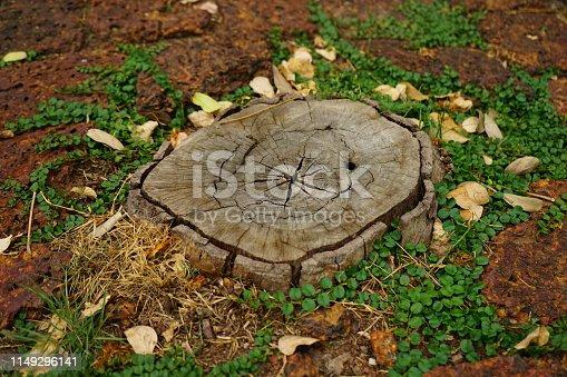 Forest, Woodland, Springtime, Agricultural Field, Land