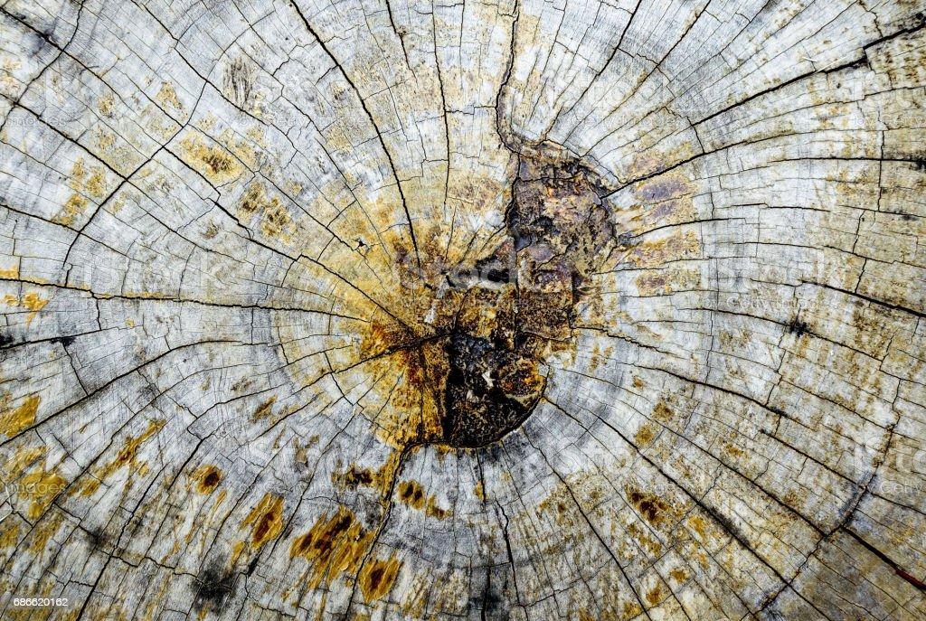 stump photo libre de droits