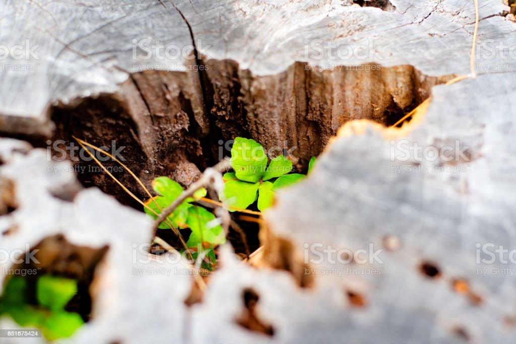 Stump stock photo