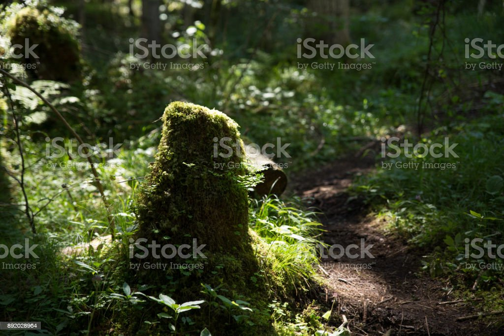 Stump stock photo