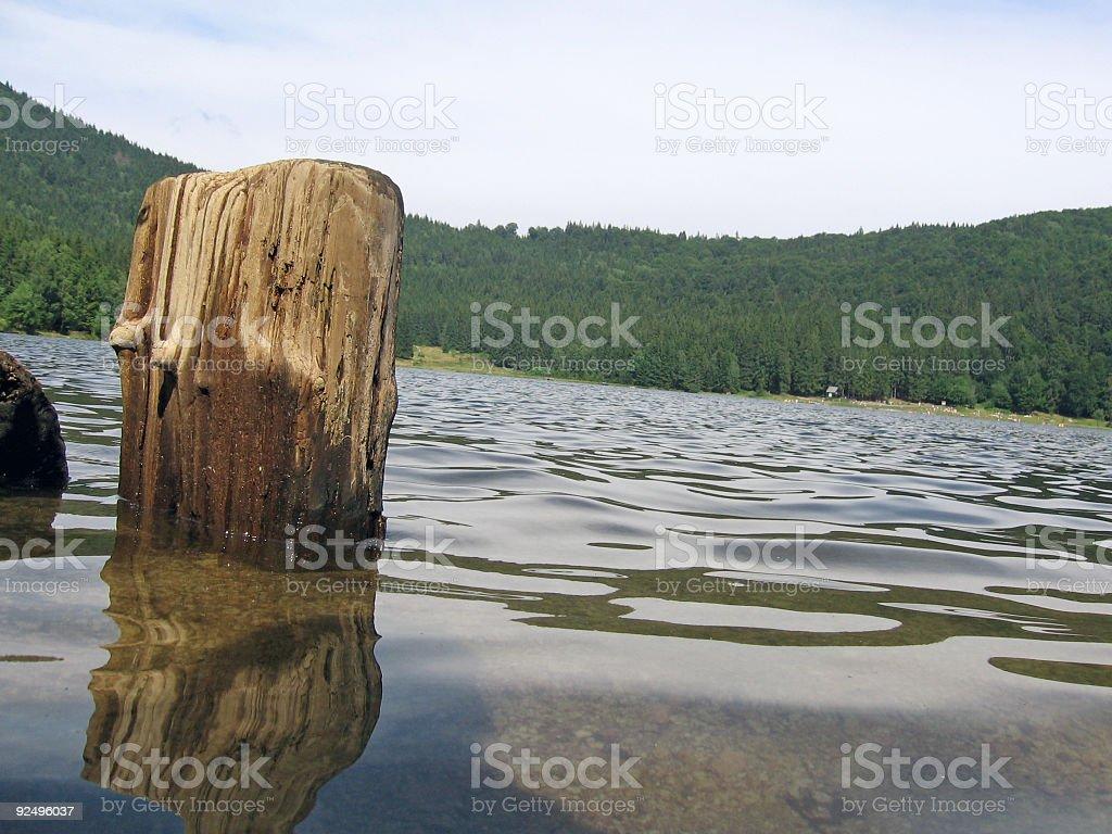 Stump tree royalty-free stock photo