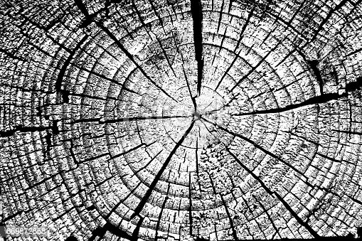 istock Stump with annual rings background black and white. 869872858