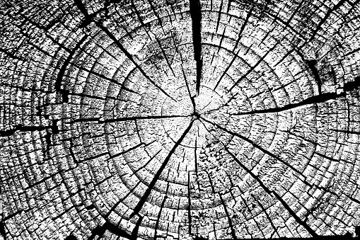 Stump with annual rings background black and white.
