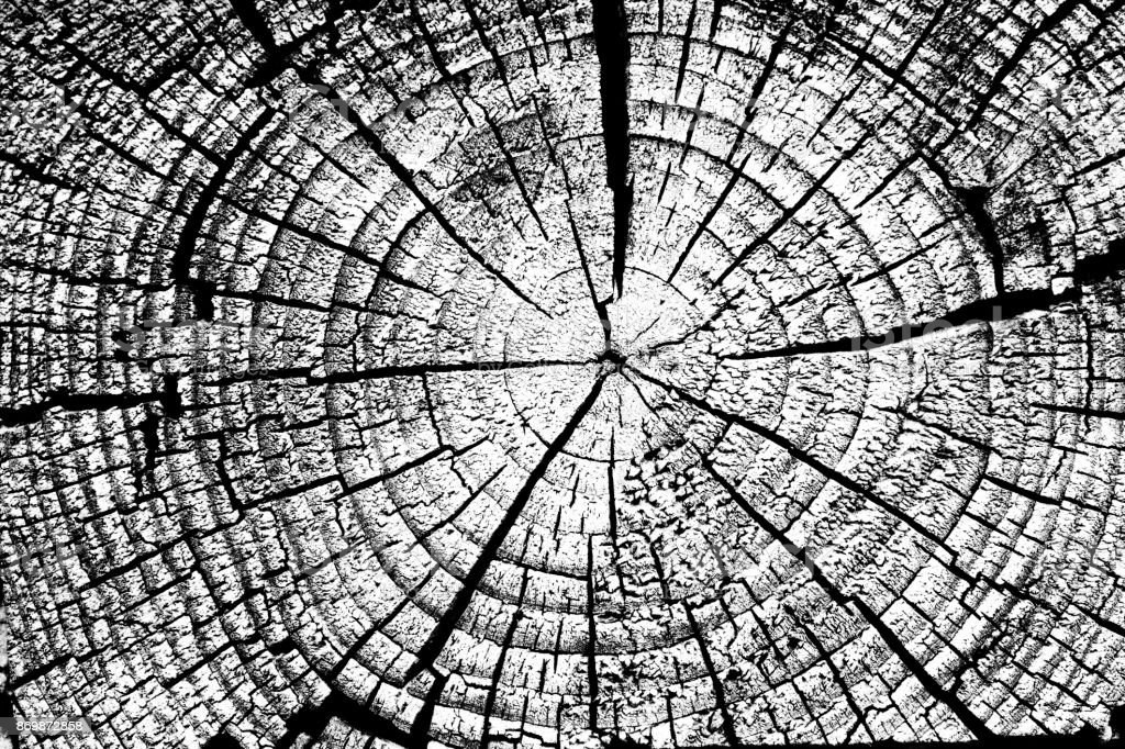 Stump with annual rings background black and white. stock photo