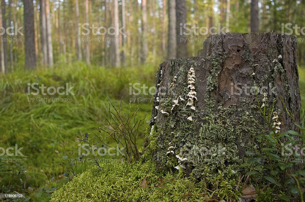 stump with moss and lichen stock photo