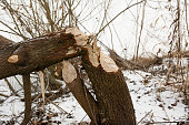 Nature park in Pitesti, Romania with heavy snow