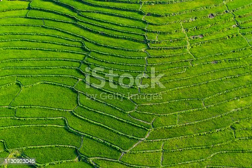 (View from above) Stunning aerial view of a spectacular green rice terrace which forms a natural texture on the hills of Luang Prabang, Laos.