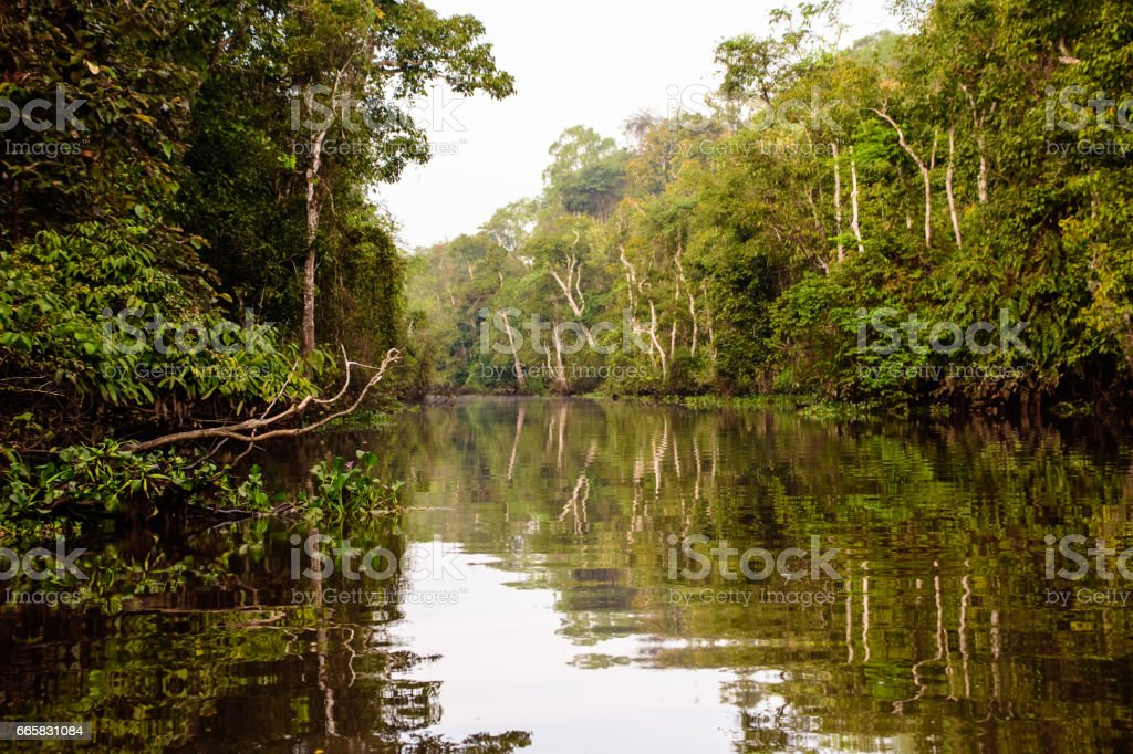 stunning beauty of the Kinabatangan river in borneo stock photo