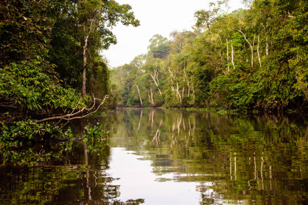stunning beauty of the Kinabatangan river in borneo stunning beauty of the Kinabatangan river island of borneo stock pictures, royalty-free photos & images