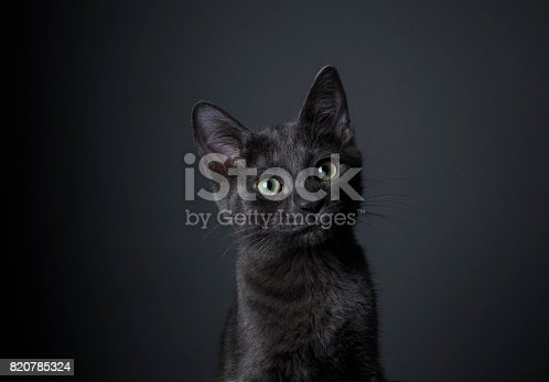 istock Stunning Black Kitten - The Amanda Collection 820785324