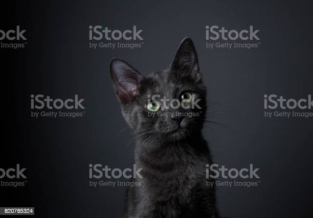 Stunning black kitten the amanda collection picture id820785324?b=1&k=6&m=820785324&s=612x612&h=c4wo6suppktb69pesygnd f 27ievquvijfcpywjmi4=