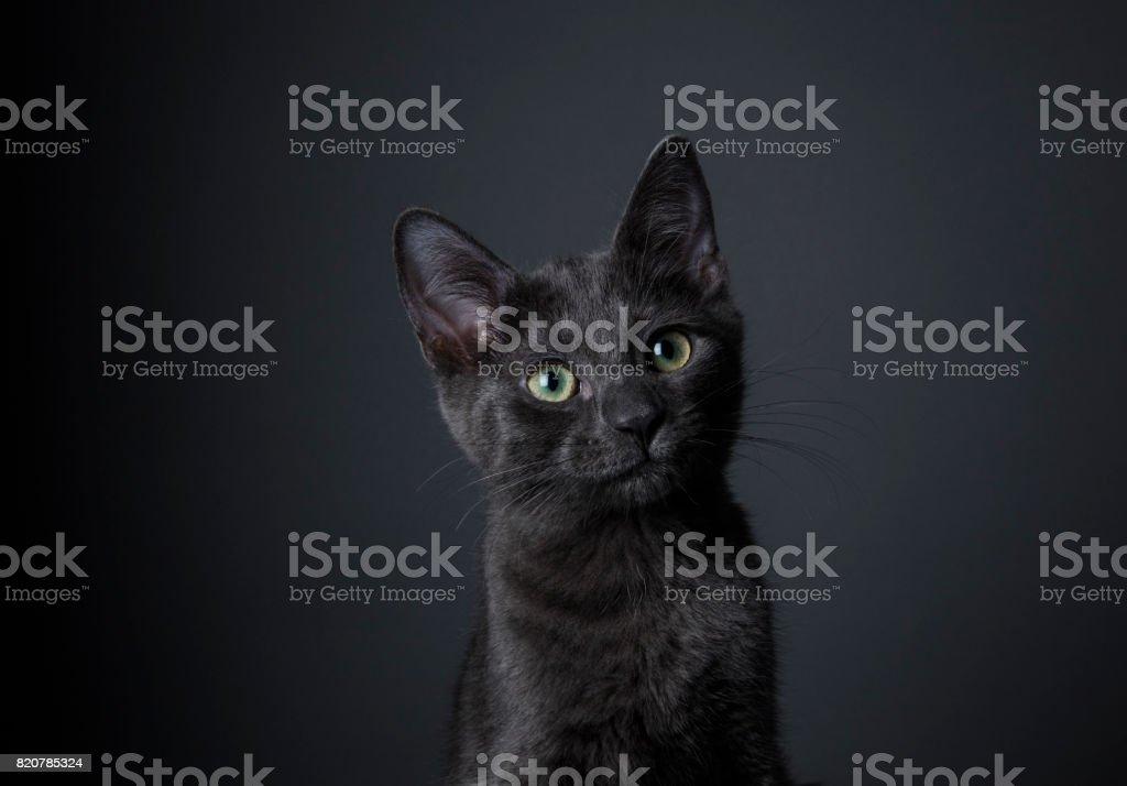 Stunning Black Kitten - The Amanda Collection stock photo