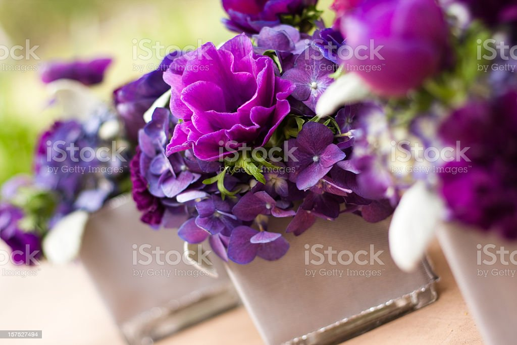 A stunning collection of purple flowers stock photo