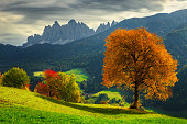 Beautiful autumn alpine landscape, colorful deciduous trees and green fields with high mountains in background, near Santa Maddalena village, Funes valley, Dolomites, Italy, Europe