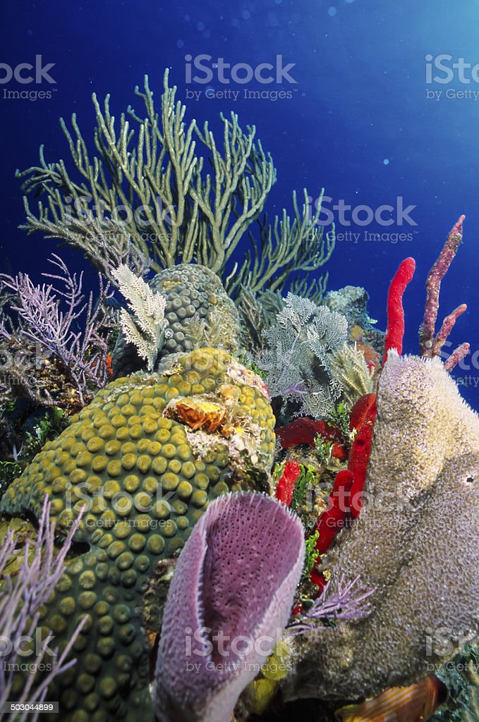 Stunning Coral Reef stock photo