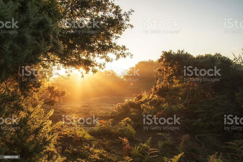 Stunning dawn sunrise landscape in misty New Forest countryside stock photo