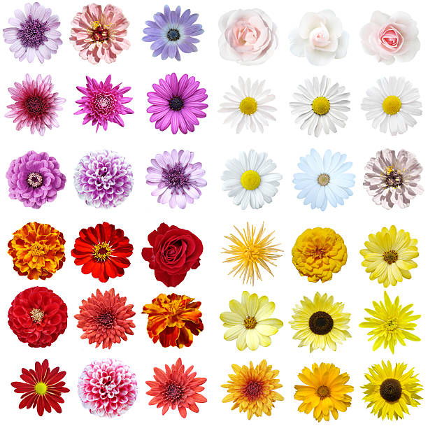 A stunning flower collage on a white background Colorful collage of flowers on isolated background single flower stock pictures, royalty-free photos & images