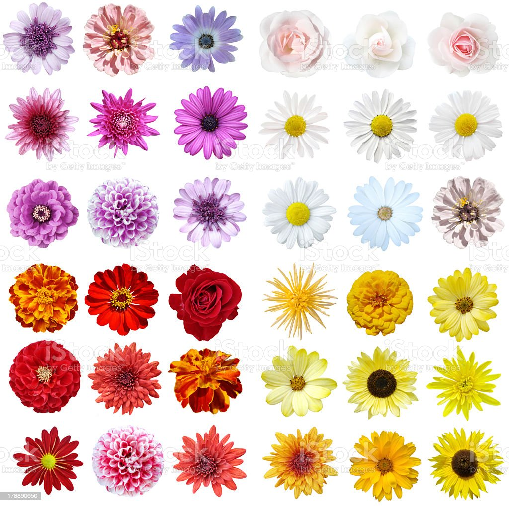 A stunning flower collage on a white background stock photo