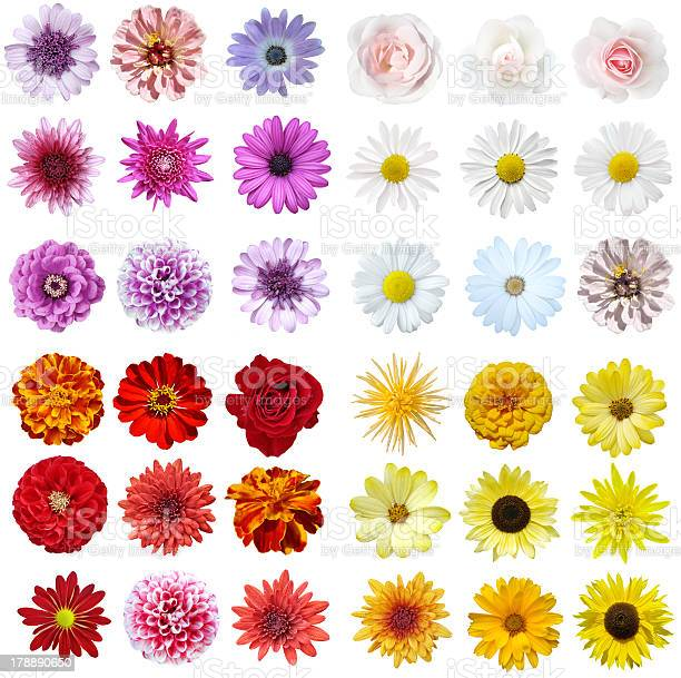 Photo of A stunning flower collage on a white background