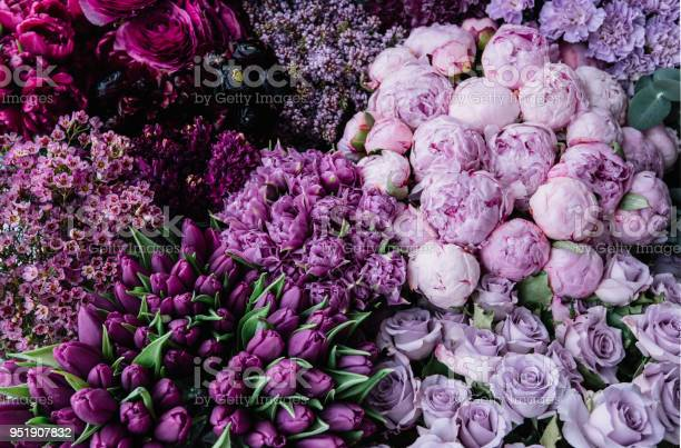 Stunning gradient of fresh blossoming flowers from dark purple to picture id951907832?b=1&k=6&m=951907832&s=612x612&h=9jgv5uab vof9wfq7g3ay4ptgzagplltwr936kjrefg=