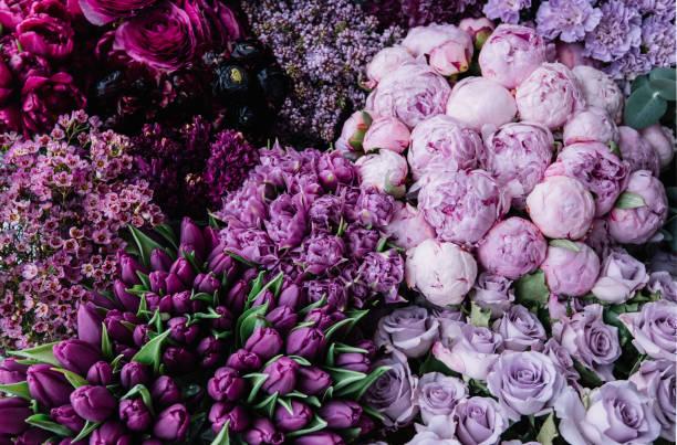 Stunning gradient of fresh blossoming flowers from dark purple to picture id951907832?b=1&k=6&m=951907832&s=612x612&w=0&h=xt72l5z6qoapzfxwyvv 0u13otqxa5bp3vimv2ylu4a=