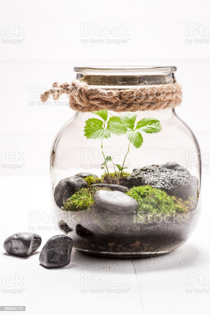 Stunning jar with piece of green forest foto de stock libre de derechos