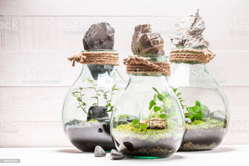 Stunning jar with piece of green forest with self ecosystem royalty-free stock photo